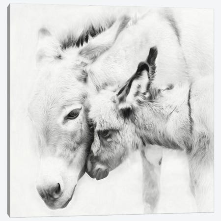 Donkey Portrait III 3-Piece Canvas #PHB78} by PH Burchett Canvas Art Print