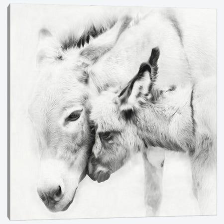 Donkey Portrait III Canvas Print #PHB78} by PHBurchett Canvas Art Print