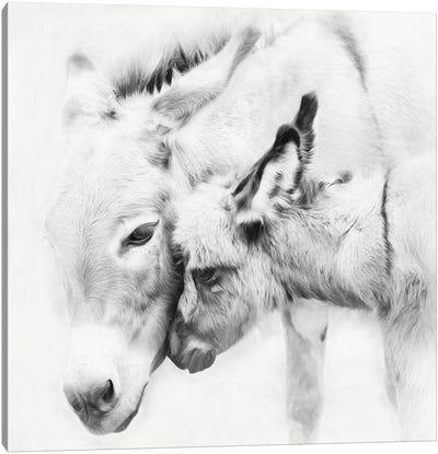 Donkey Portrait III Canvas Art Print