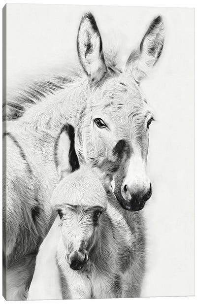 Donkey Portrait V Canvas Art Print