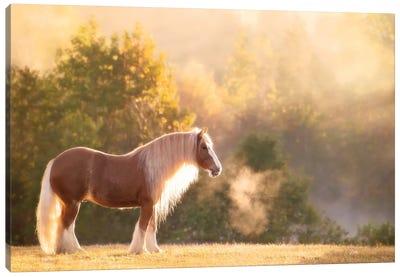 Golden Lit Horse I Canvas Art Print