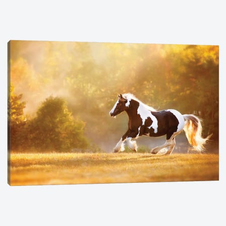 Golden Lit Horse II Canvas Print #PHB81} by PHBurchett Canvas Art