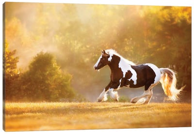 Golden Lit Horse II Canvas Art Print