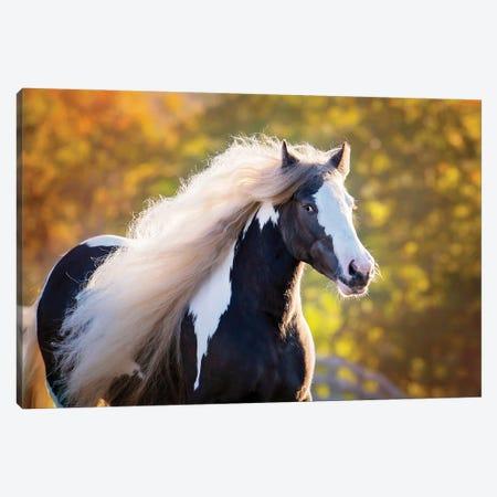 Golden Lit Horse III Canvas Print #PHB82} by PHBurchett Canvas Wall Art