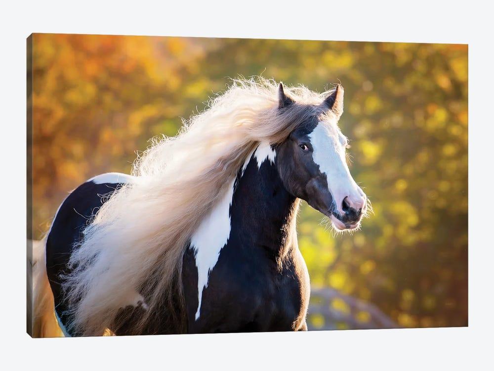 Golden Lit Horse III by PHBurchett 1-piece Canvas Art