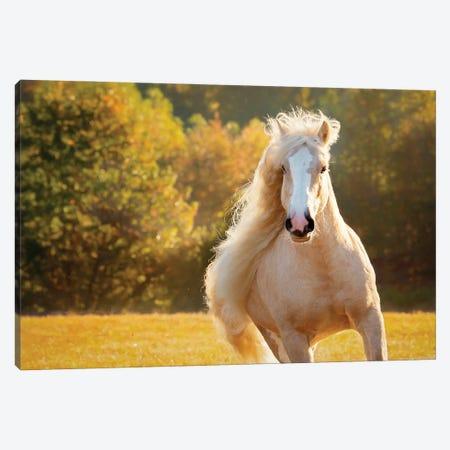 Golden Lit Horse IV Canvas Print #PHB83} by PHBurchett Canvas Art