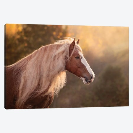 Golden Lit Horse V Canvas Print #PHB84} by PHBurchett Canvas Art Print