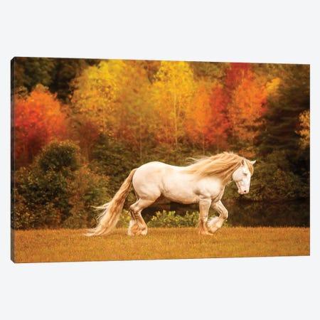 Golden Lit Horse VI Canvas Print #PHB85} by PHBurchett Canvas Print