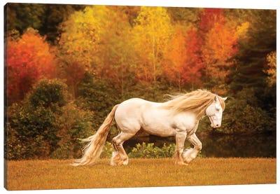 Golden Lit Horse VI Canvas Art Print