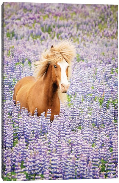 Horse in Lavender I Canvas Art Print
