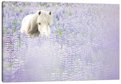 Horse in Lavender II Canvas Art Print