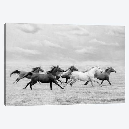 Horse Run I Canvas Print #PHB88} by PHBurchett Canvas Art