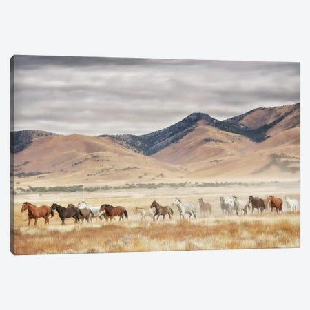 Horse Run II Canvas Print #PHB89} by PHBurchett Canvas Art
