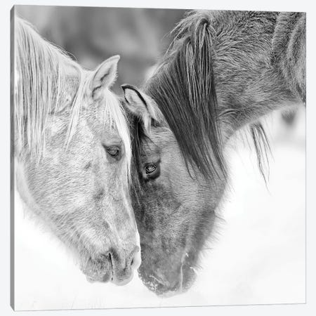 B&W Horses VII Canvas Print #PHB8} by PH Burchett Canvas Artwork