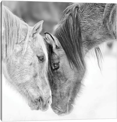 B&W Horses VII Canvas Art Print