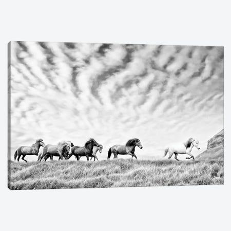 Horse Run III Canvas Print #PHB90} by PHBurchett Canvas Art Print