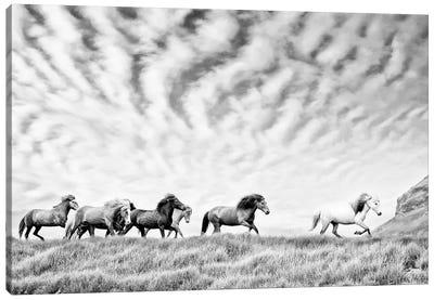 Horse Run III Canvas Art Print