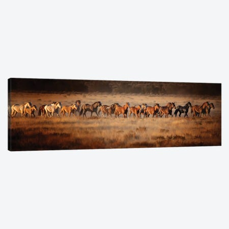 Horse Run VII 3-Piece Canvas #PHB94} by PH Burchett Canvas Artwork