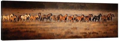 Horse Run VII Canvas Art Print