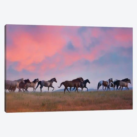 Horse Run VIII Canvas Print #PHB95} by PHBurchett Canvas Wall Art