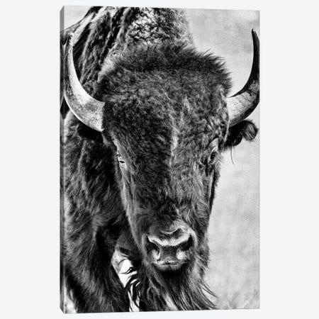 Buffalo Portrait Canvas Print #PHB97} by PHBurchett Canvas Art