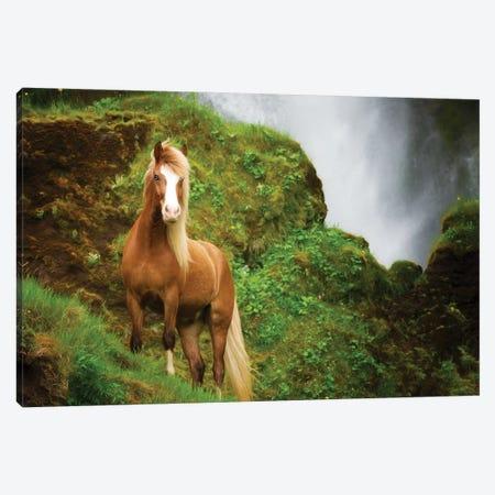 Collection of Horses I Canvas Print #PHB98} by PHBurchett Canvas Print