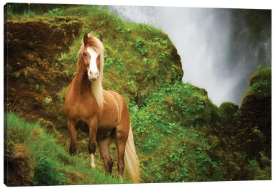 Collection of Horses I Canvas Art Print