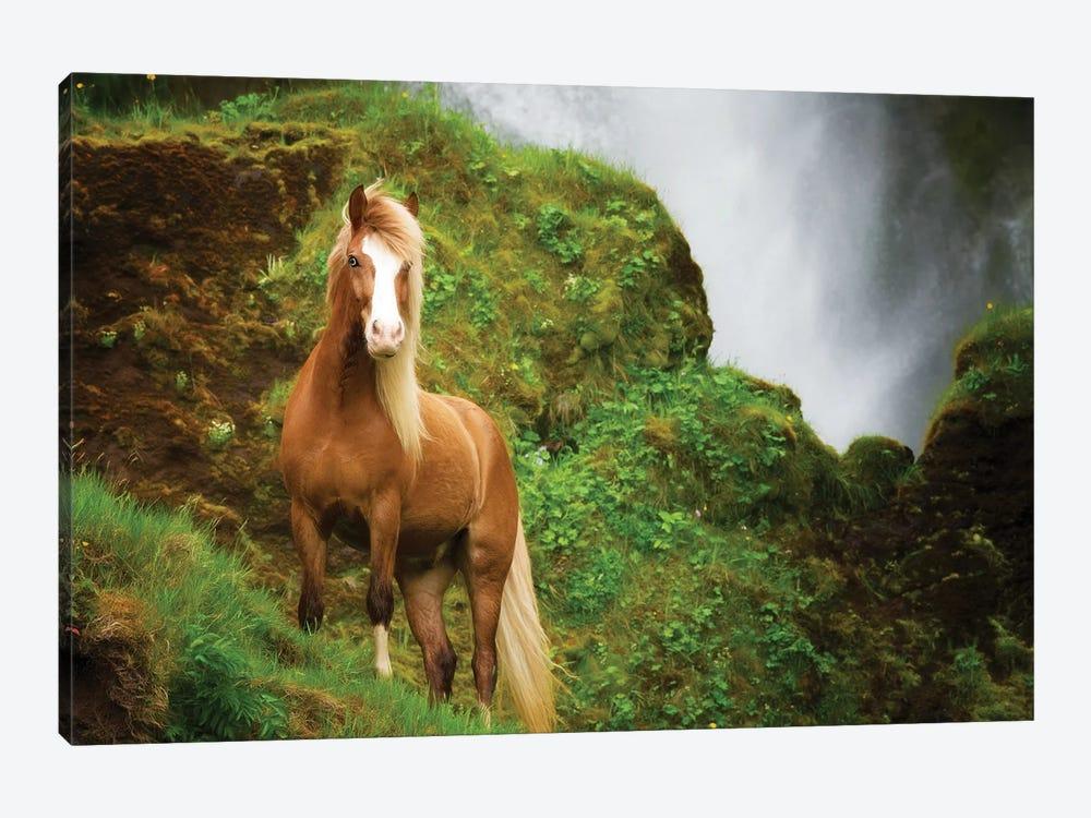 Collection of Horses I by PHBurchett 1-piece Art Print