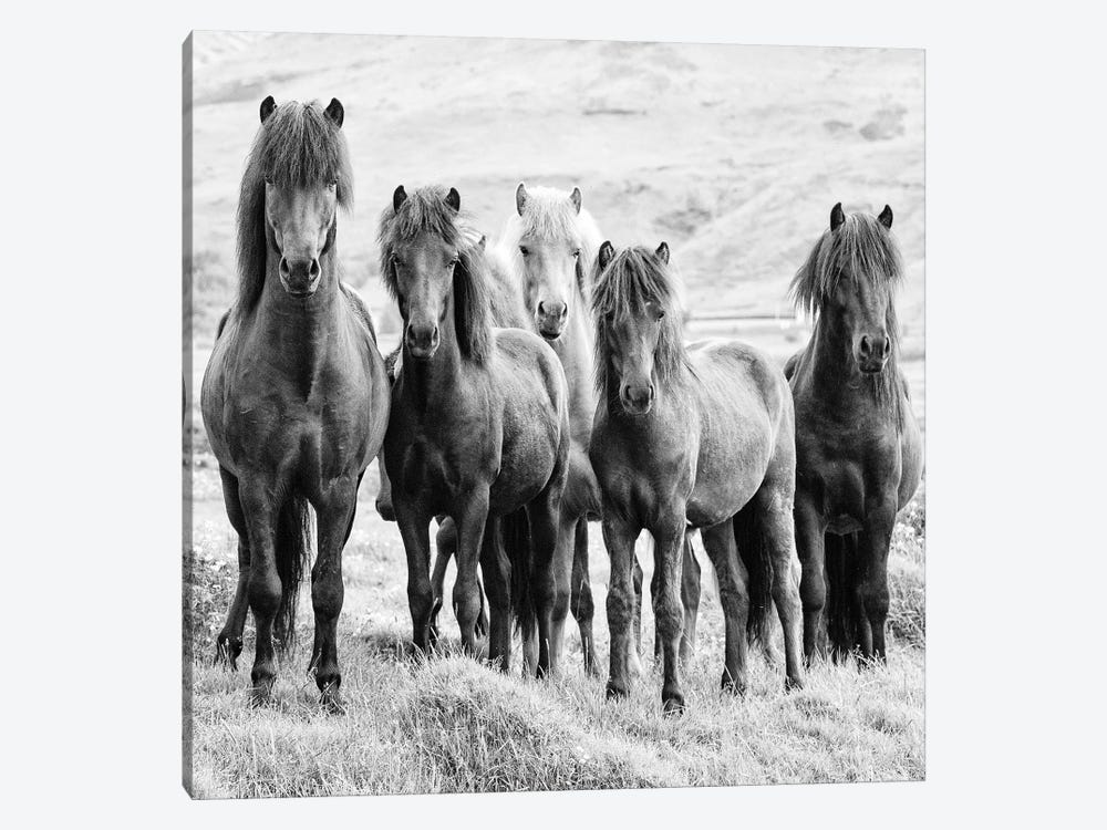 B&W Horses VIII by PH Burchett 1-piece Canvas Art Print