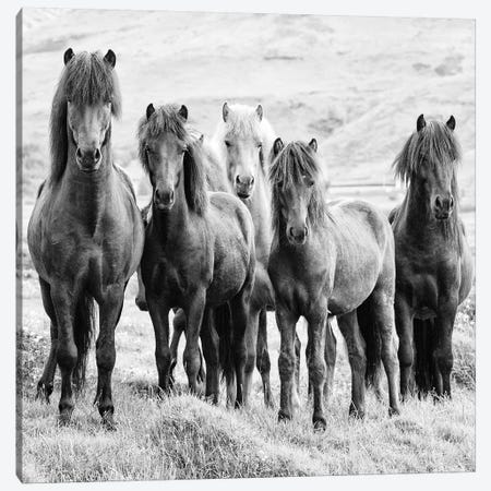 B&W Horses VIII Canvas Print #PHB9} by PHBurchett Canvas Art