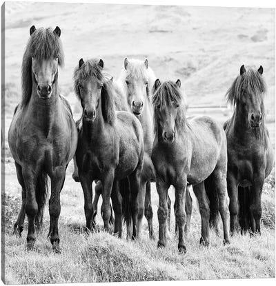 B&W Horses VIII Canvas Art Print