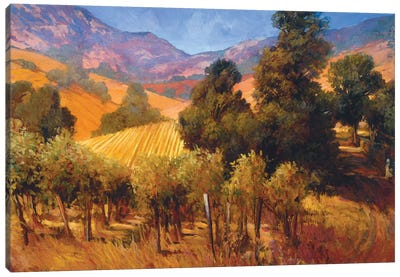 Southern Vineyard Hills Canvas Art Print
