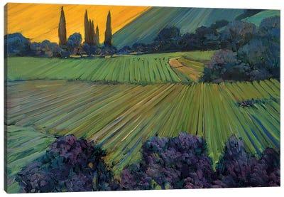 Champagne Vineyards Canvas Art Print