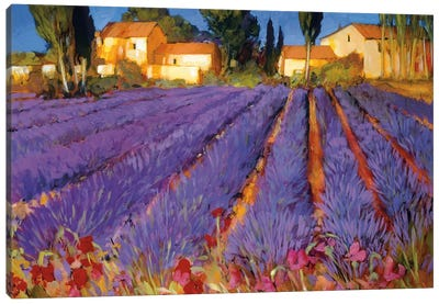 Late Afternoon, Lavender Fields Canvas Art Print