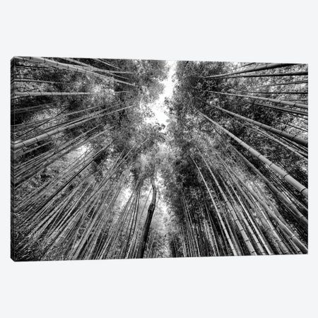 Sagano Bamboo Forest 3-Piece Canvas #PHD1292} by Philippe Hugonnard Canvas Wall Art