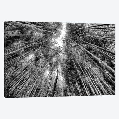 Sagano Bamboo Forest Canvas Print #PHD1292} by Philippe Hugonnard Canvas Wall Art