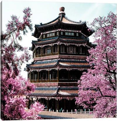 Pink Spring II Canvas Art Print