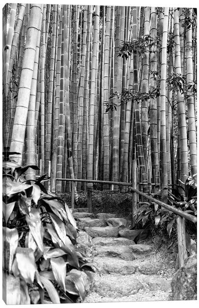 Between Bamboos Canvas Art Print
