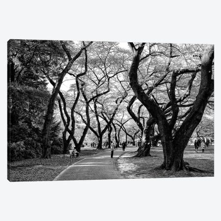 Majestic Trees Canvas Print #PHD1325} by Philippe Hugonnard Art Print