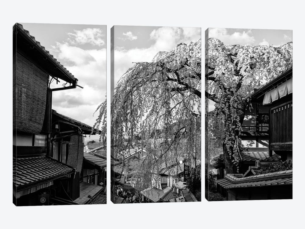 Kyoto Cherry Blossoms by Philippe Hugonnard 3-piece Canvas Art Print