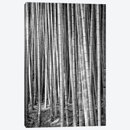 Thousand And One Bamboos Canvas Print #PHD1391} by Philippe Hugonnard Art Print