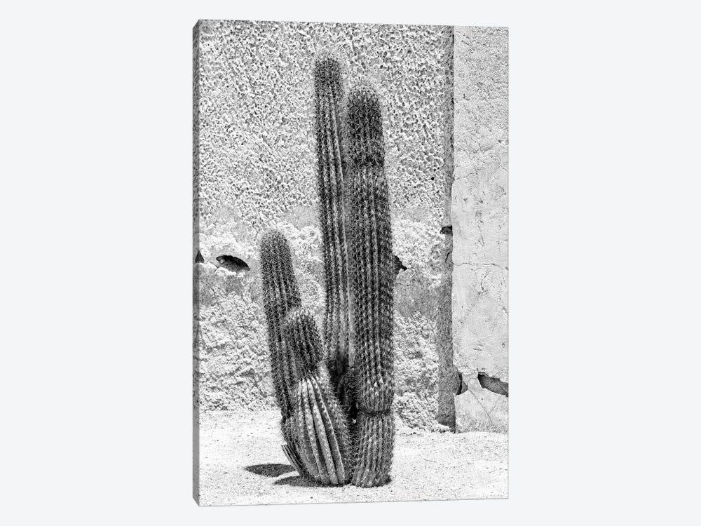 Black Arizona Series - Cactus by Philippe Hugonnard 1-piece Canvas Art Print