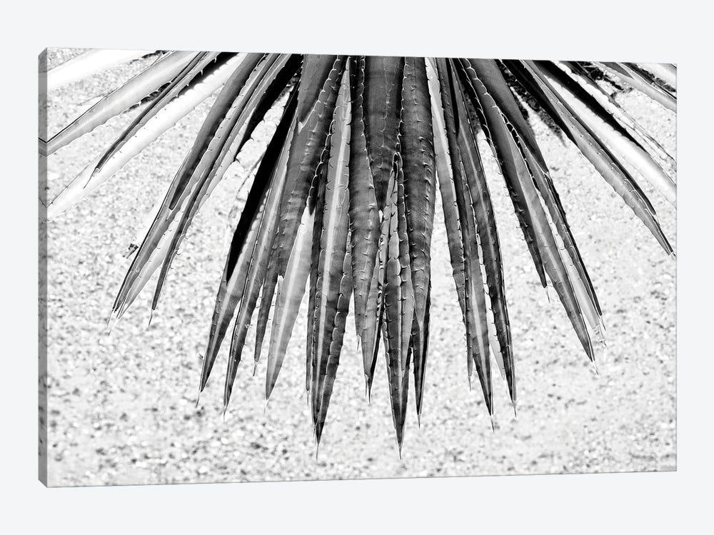 Black Arizona Series - Aloe Vera by Philippe Hugonnard 1-piece Canvas Wall Art