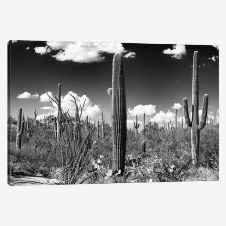 Black Arizona Series - Saguaro Cactus Canvas Print #PHD1475} by Philippe Hugonnard Canvas Art Print
