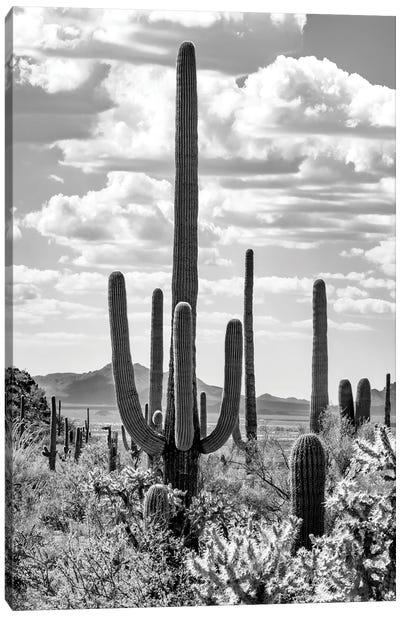 Black Arizona Series - Giant Saguano Cactus Canvas Art Print