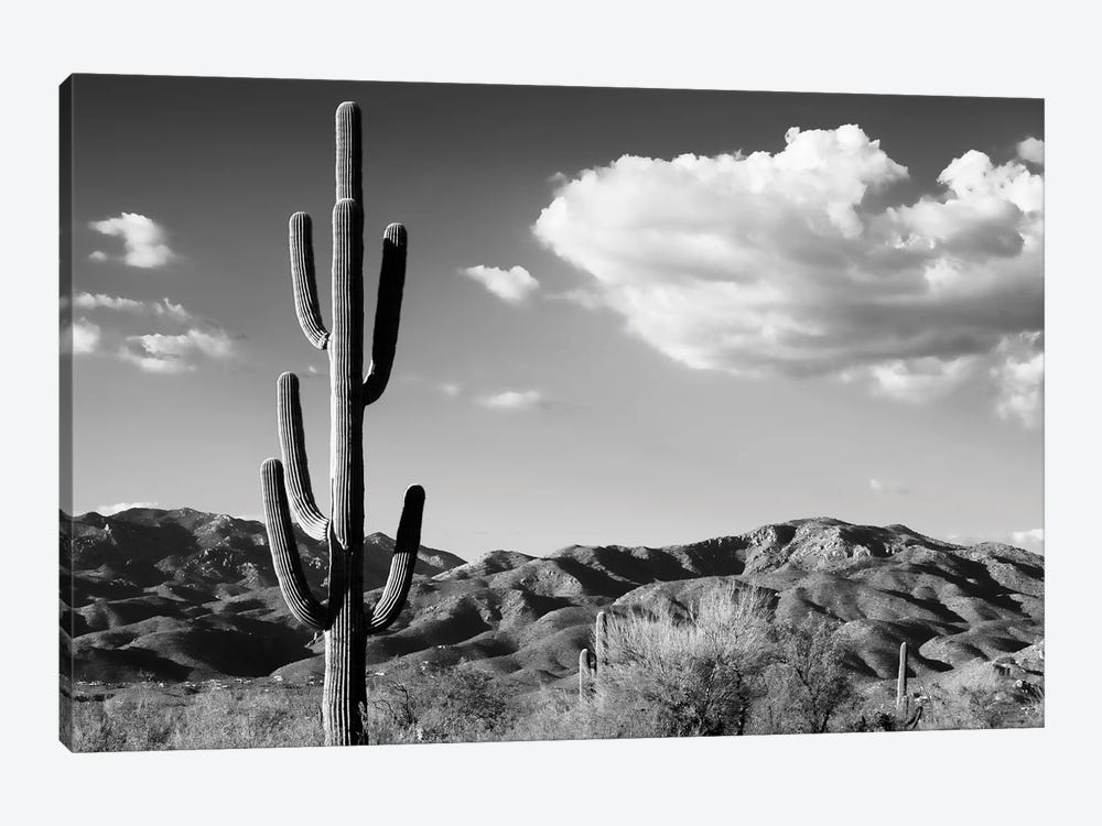 Black Arizona Series - Saguaro Cactus Sunrise by Philippe Hugonnard 1-piece Art Print