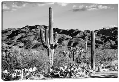 Black Arizona Series - Tucson Desert Cactus Canvas Art Print