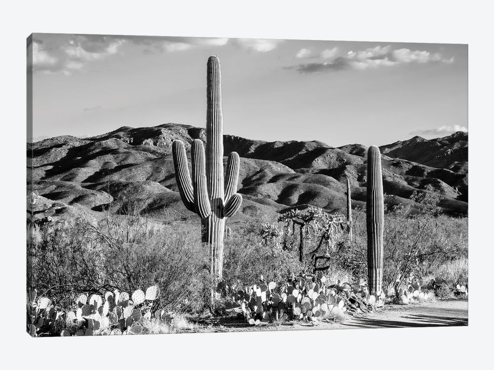 Black Arizona Series - Tucson Desert Cactus by Philippe Hugonnard 1-piece Canvas Print