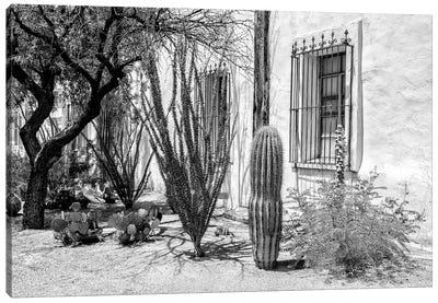 Black Arizona Series - Beautiful Desert Plants Canvas Art Print