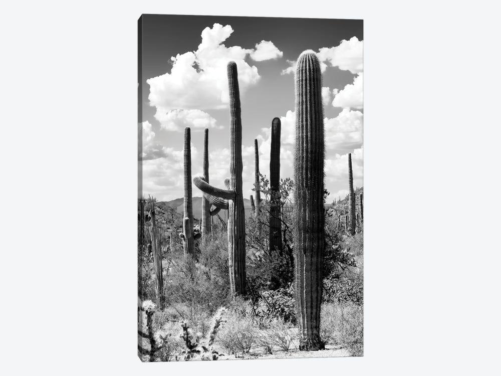 Black Arizona Series - The Cactus by Philippe Hugonnard 1-piece Canvas Art